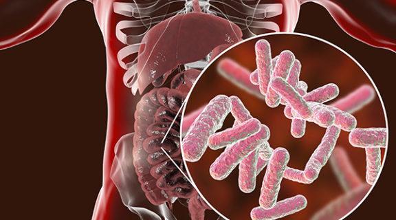 Can Gut Bacteria Treat Disease?